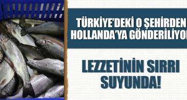 Türkiye'deki o şehirden Hollanda'ya gönderiliyor! Lezzetinin sırrı suyunda